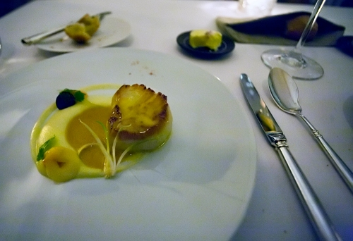 Scallop at Eleven Madison Park