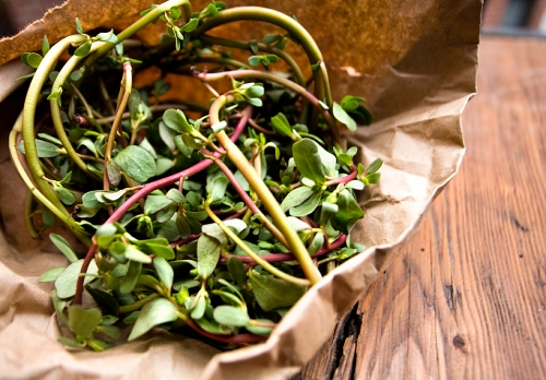 Purslane from the Greenmarket