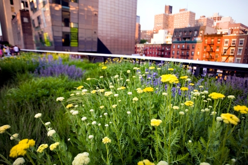 Flowers Along The High Line, Phase Two